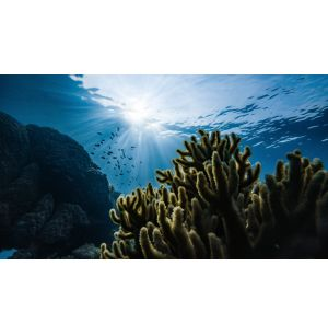 Study Reveals Impact of Mining on Coral Reefs