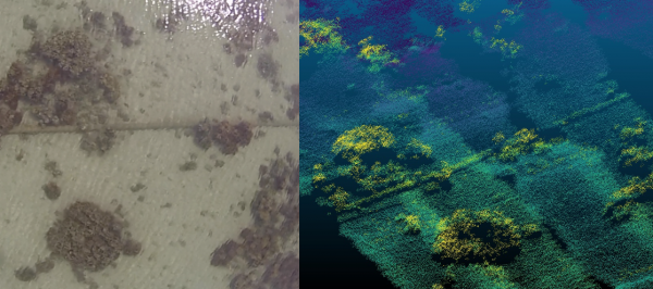 Figure 1: ASTRALiTe 15cm diameter pipe location in coral bed on Coconut Island, Hawaii; Left - GoPro image, Right - Lidar point cloud.