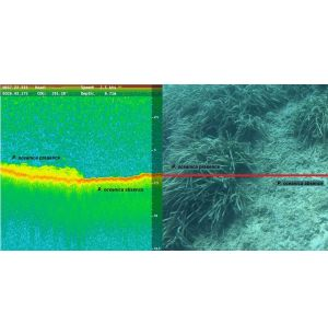 Mapping the Subsea Forests of the Mediterranean